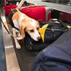 detector dog checking bags