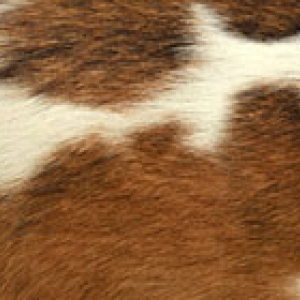 cowhide close up