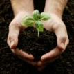 PGP seedling in hands